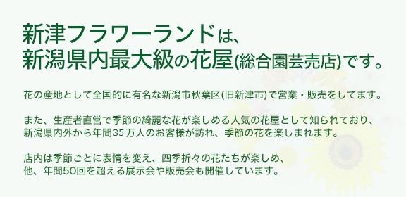 新津フラワーランドは、新潟県内最大級の花屋(総合園芸売店)です。