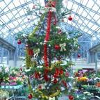 クリスマスツリーが登場!!