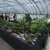 盆栽・山野草フリーマーケット