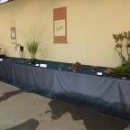 県内山野草愛好者の展示会が始まりました!!