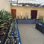 江戸時代より受け継がれる植物たち
