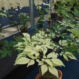 斑入り植物展 風景