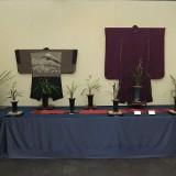 第18回 伝統園芸植物展 『寒蘭』